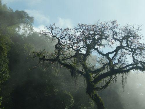 tree mountain san javier