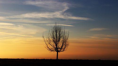 tree morning morgenrot