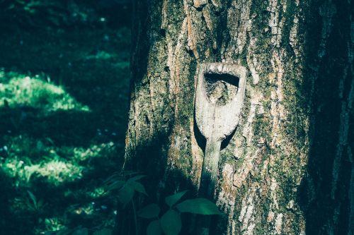 tree nature spade handle