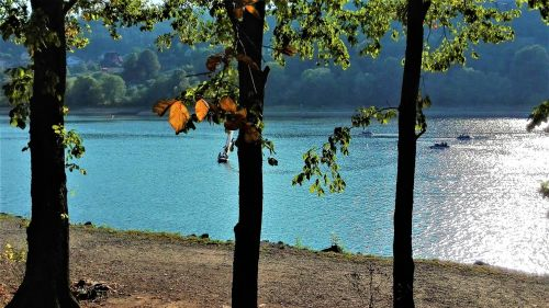 tree lake september