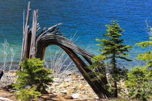 tree water lake tahoe