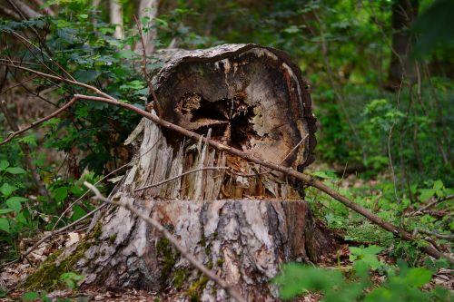 tree tree damage favor