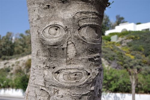 tree face bark