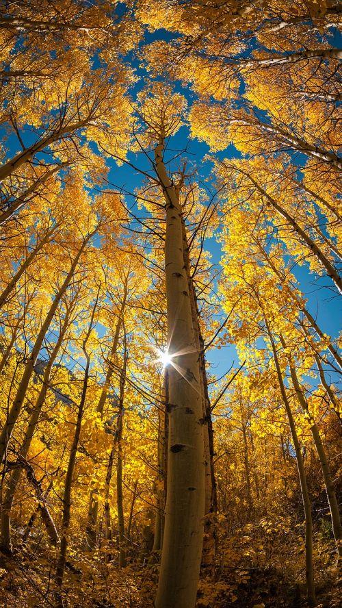 tree autumn light