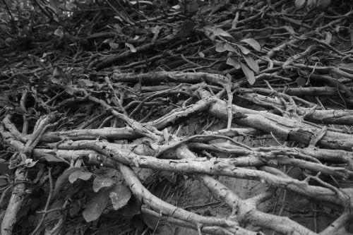 tree black and white white
