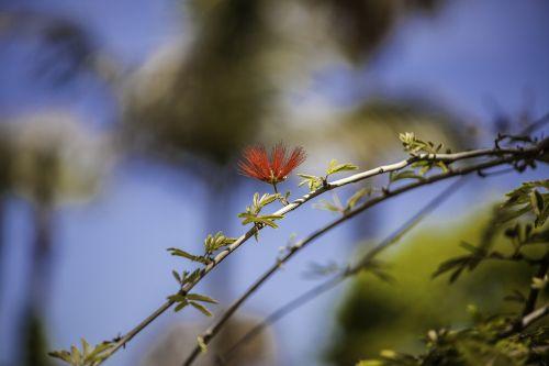 tree blossom bloom