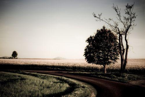 tree road artistically