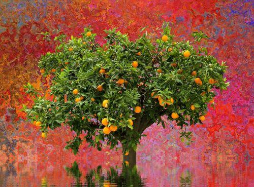 medis,oranžinis medis,gamta,vienišas medis,kraštovaizdis,vienas,poilsis