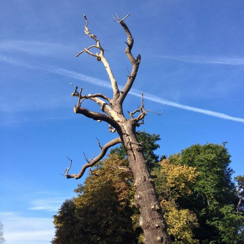tree woods tree trunk