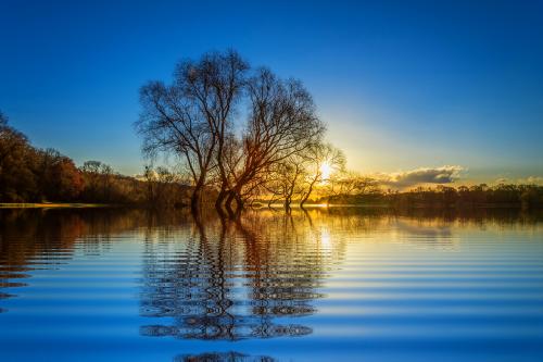 tree lake mirroring