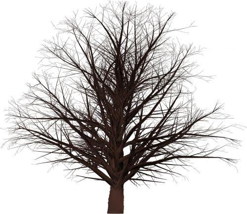 tree 3d masked
