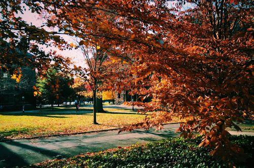 tree nature campus