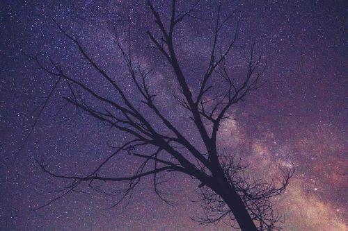 tree branches purple