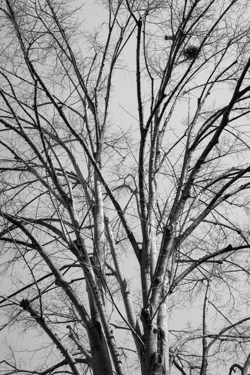 tree branches autumn