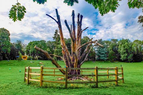 tree wood dead