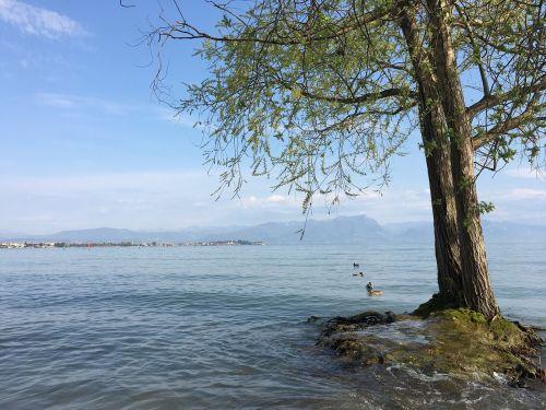 tree lake sirmione