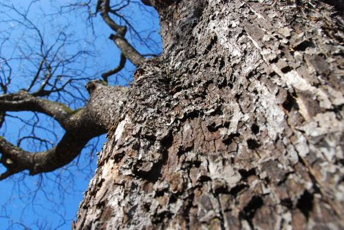tree tree bark bark