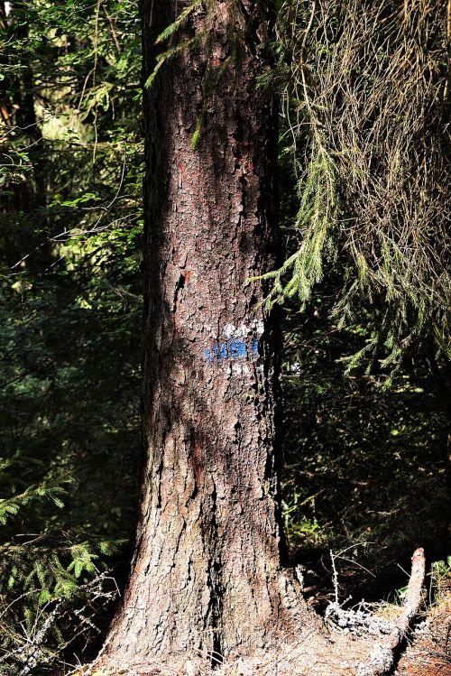 tree waymarks mark
