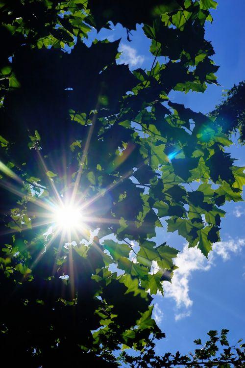 tree leaves sky