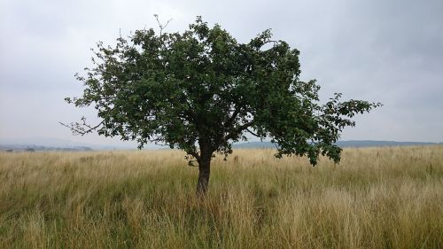tree meadow landscape