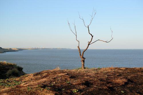 tree loneliness sorrow