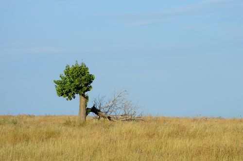 tree loneliness revival