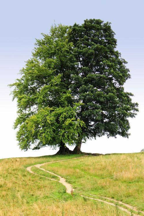 tree the path trail