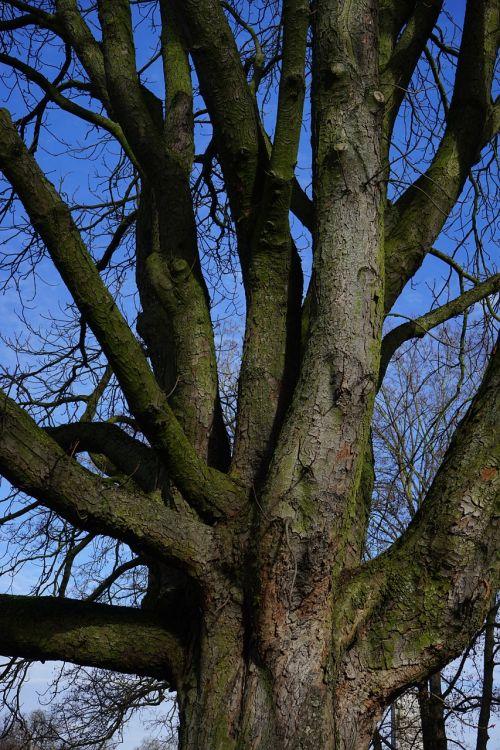 tree log aesthetic