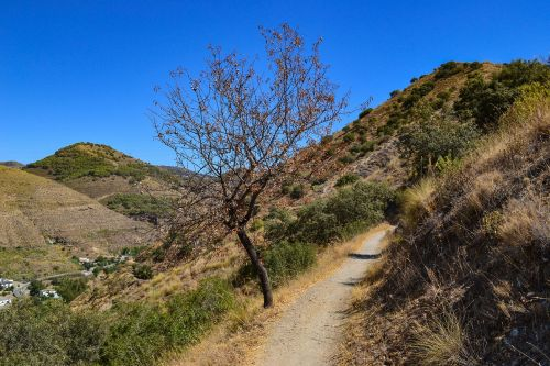 tree path mountains
