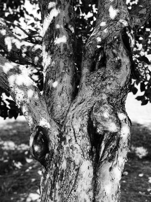 tree nature old tree