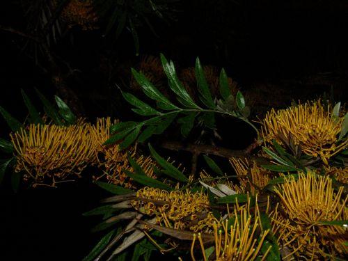 tree flowers yellow