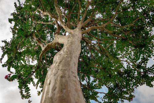 medis,gamta,grožis,augalai,lapai,botanistas,aplinkos Brazilija,Brazilija