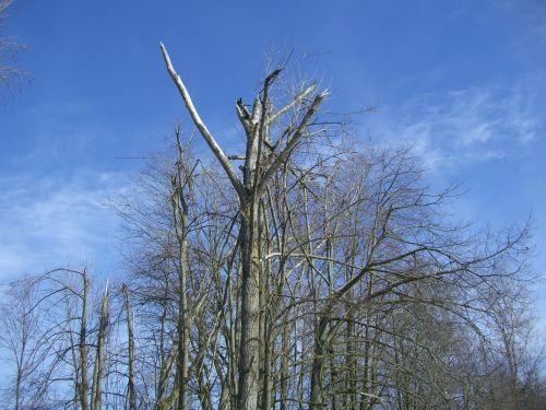 tree top break storm damage