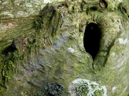 tree branch spirit