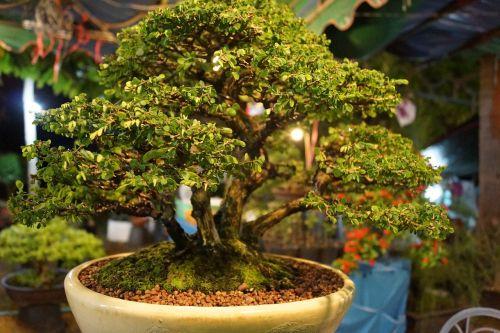 tree of tiny jardiniere