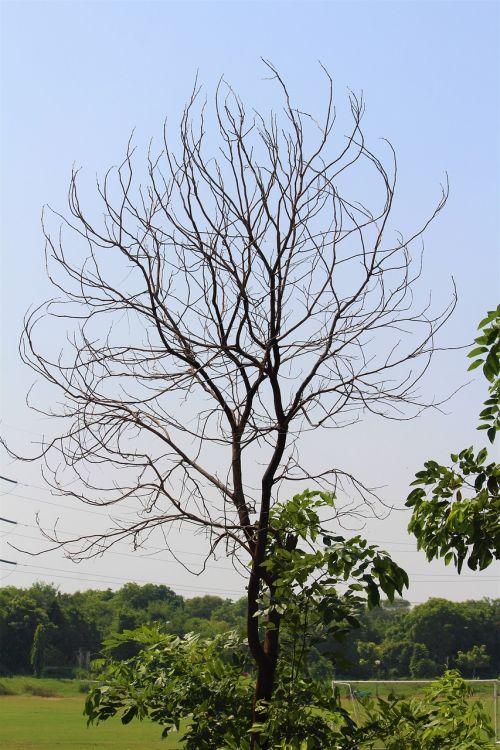 tree autumn branches