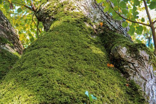 tree autumn moss