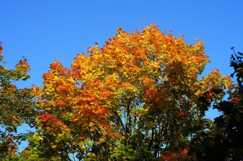 tree leaves colorful