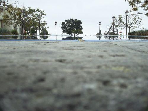 tree pool ledge campus