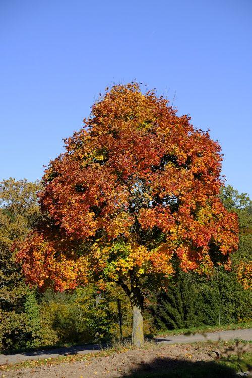 tree landscape autumn