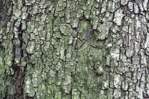 tree texture billet