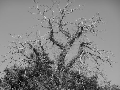 tree branches craggy