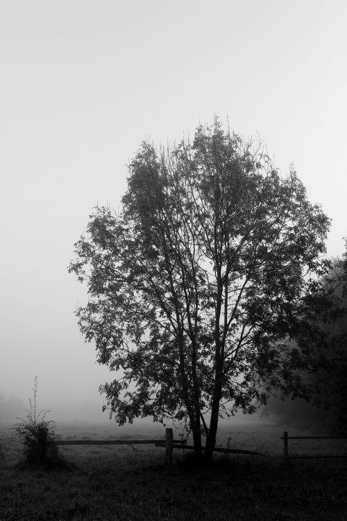 tree fog black white
