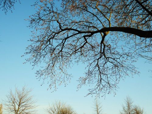tree branch branches