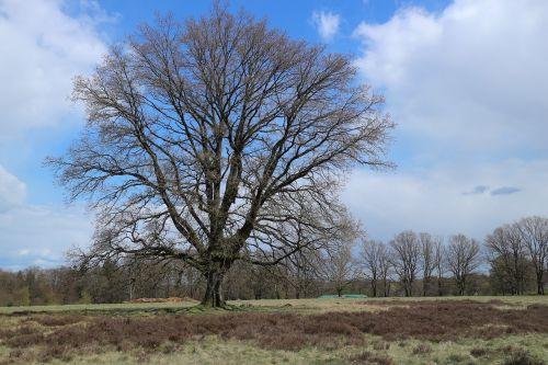 tree landscape heide