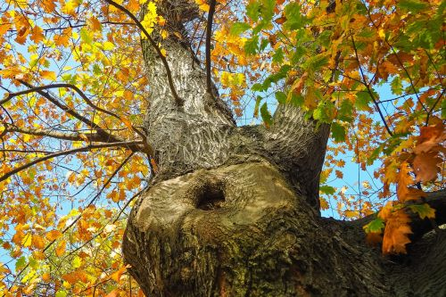 tree crown nature