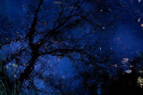 tree water mirroring