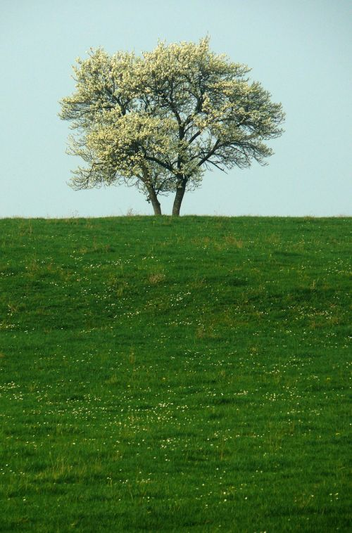 tree solitude nature