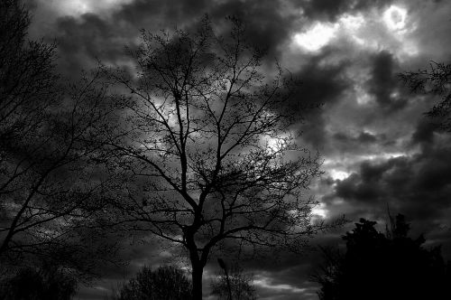 tree sky black white