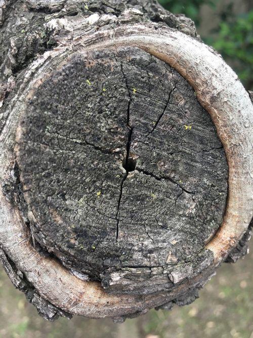 tree bark trunk